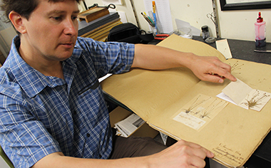 Herrick Brown examines Eriocaulon ravenelii from the Henry William Ravenel collection